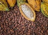 Procedure on How to Export Cocoa from Nigeria