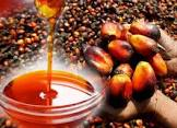 Simple Steps on How to Start a Business of Exporting Palm Oil from Nigeria