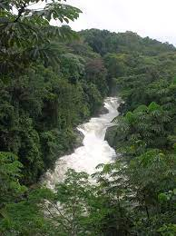 Names and Types of Forests in Nigeria and Their Location
