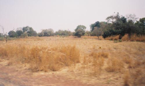 Sudan Savannah