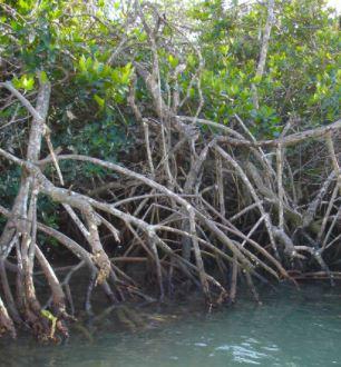 Mangrove Zone
